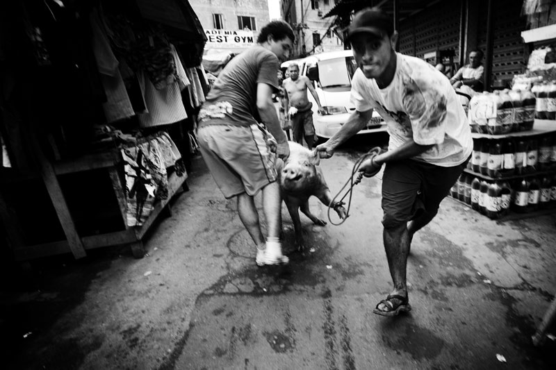 A pig is on the way of going to a meat market in Rocinha, the biggest favela in South America, where drug mafia, gangs, poverty and huge unemployment situation are extremely rampant. May 2007.