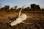 sudan_nomads_17