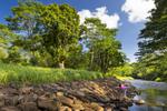 Hanalei Stream Restoration