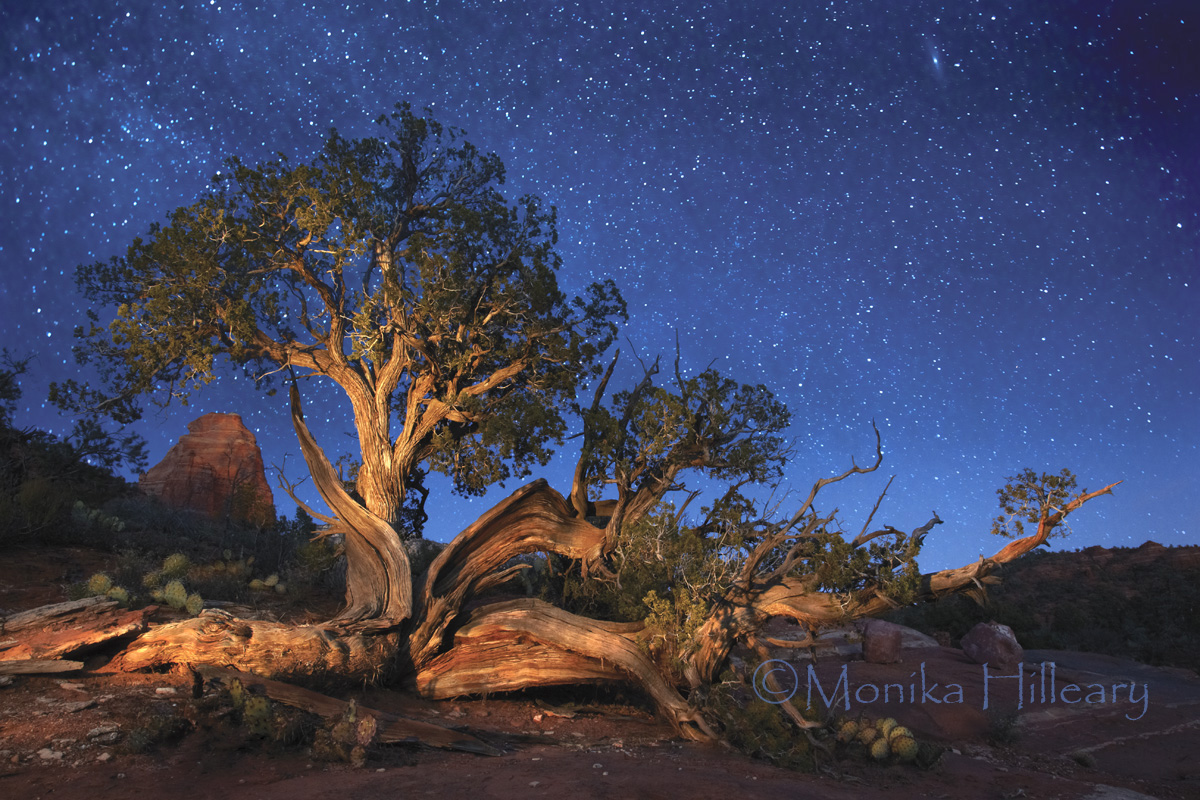 Ancients is a Light painted knarled juniper near Sedona, AZ and was photographed in tribute to our ancient ancestors and preserving our incredible planet. The tree, the rock formations the stars and the surroundings are ALL Ancient and have survived so much over many years.