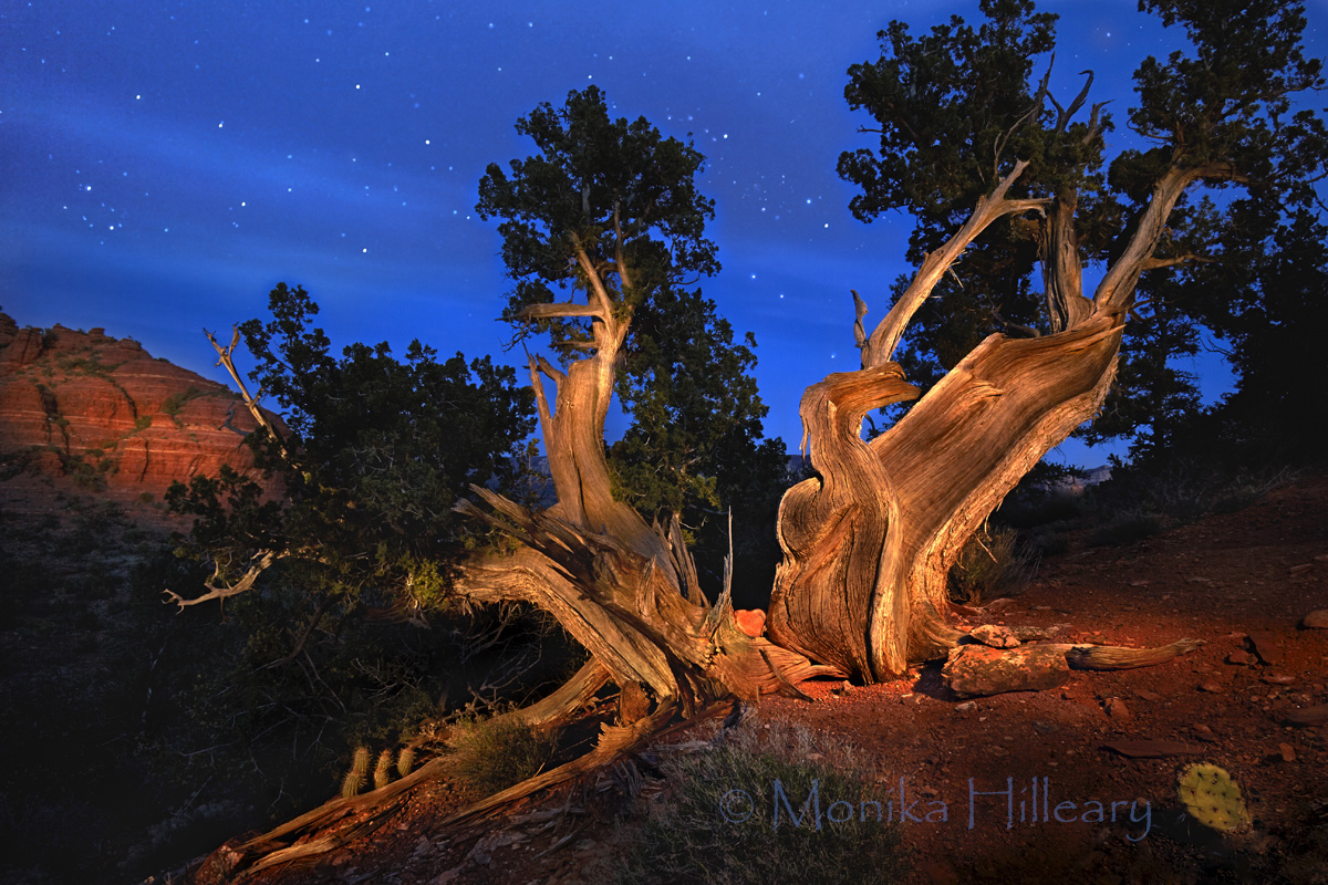 Notice the Red Rock Heart held in place by the tree trunk unfolded like angel wings. The tree is {quote}painted{quote} so to speak, with a portable moving light during a long time-exposure.