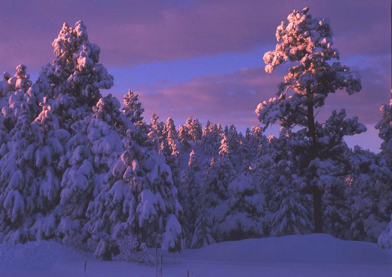 Snowy-Dawn