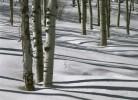aspen-shadows-H
