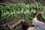 AmyThompsonAvishai_Selling_Bok_Choy_Cambodia