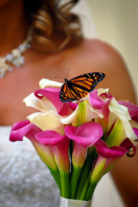 Detail shot of butterfly on bridal bouquet.©Christopher Record Photography