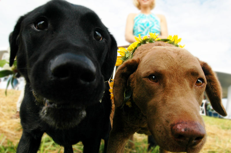 Dogs at the wedding ceremony at Pilot Mountain, NC©Christopher Record Photography