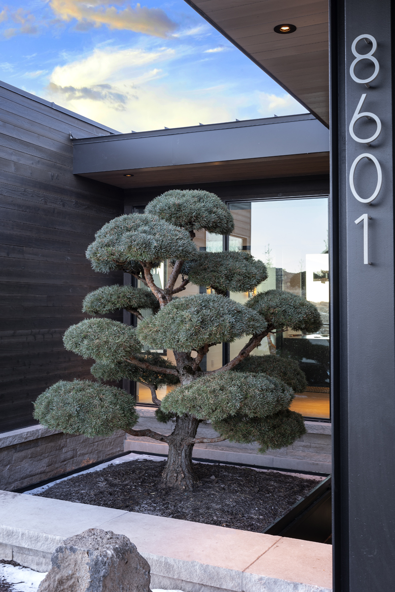 Exterior view of tree at front of house entrance