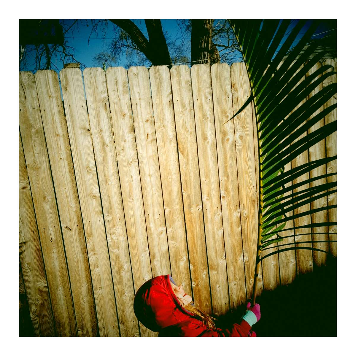 Rose found an enormous palm frond in the alley near our house. She then paraded us across 290 to a tune that was slightly derivative of Uptown Funk. December 2017.