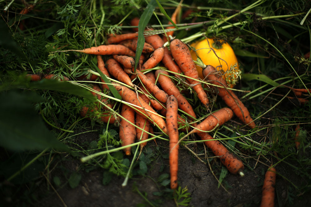 Carrots and patapan squash