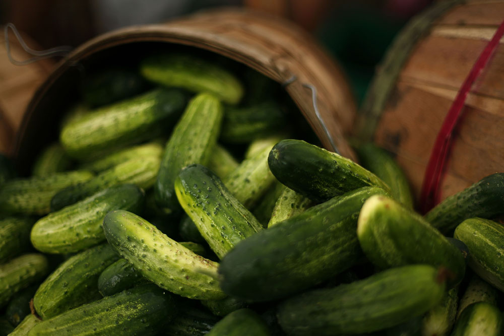 Cucumbers arranged in baskets during a summer market.