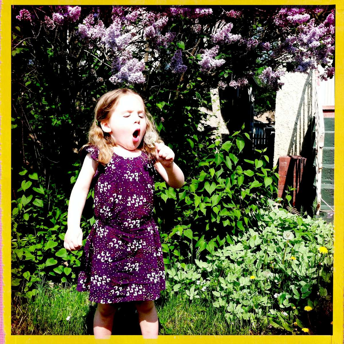 Rosie blows dandelion fluff because the fairies use them like umbrella or parachutes. May 2015.
