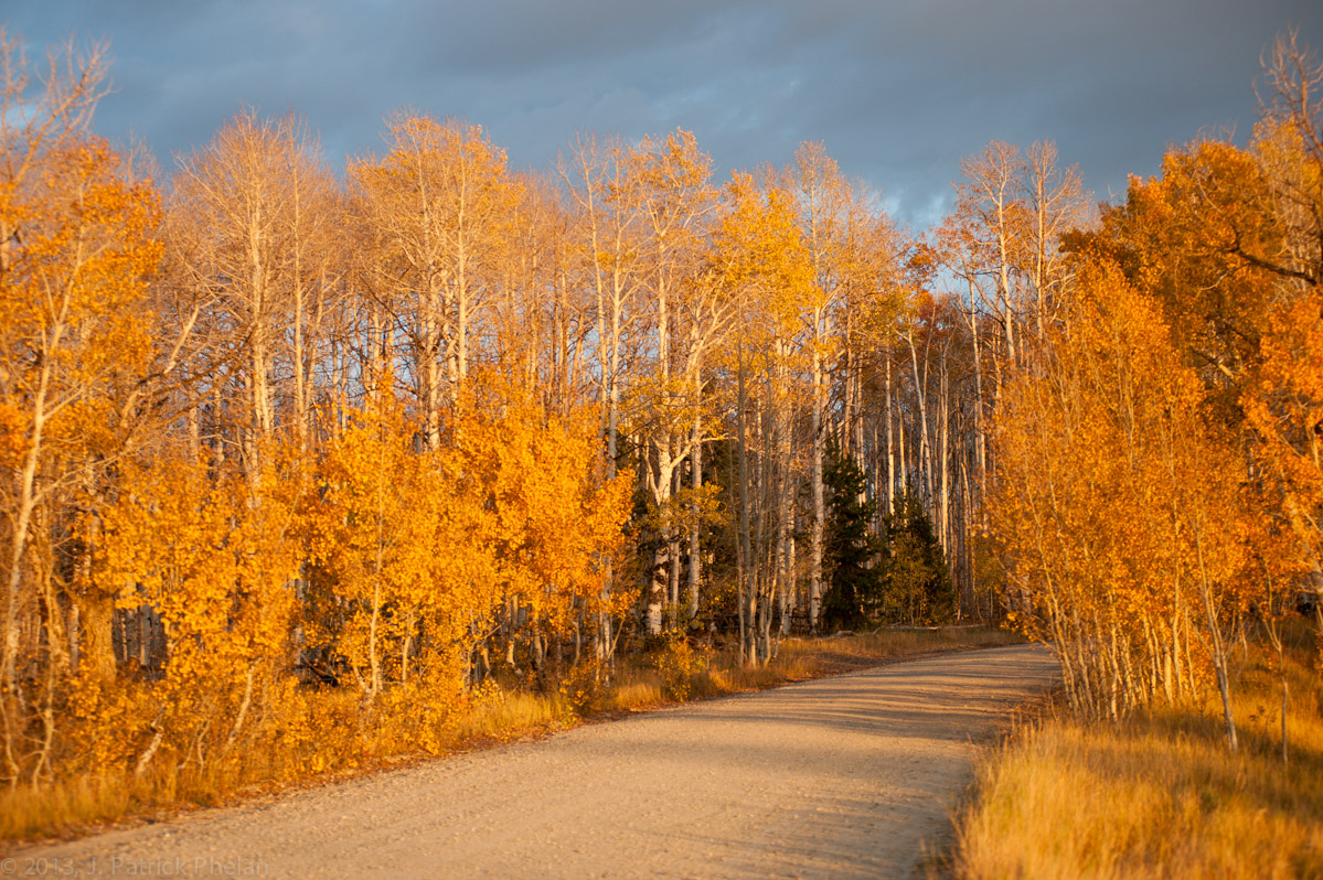 Aspen Alley in late color in the Fall of 2012. A stand of old growth aspen trees in southern Wyoming.