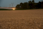 A horizontal image of a wheat field waiting to be harvested in the bottom 3/4s of the frame support a tree line and country road that is just out of site as a farm truck heads to the combines to pick up a fresh load of grain. The sky silhouettes two power line towers and lines that fill the top left corner of the frame with a muted blue evening sky.