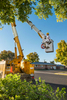 An arborist raises a truck mounted bucket on a clear blue sky day in this vertical image to trim a hackberry tree. A pile of cut branches with leaves sits on the ground in front of the yellow truck bed.