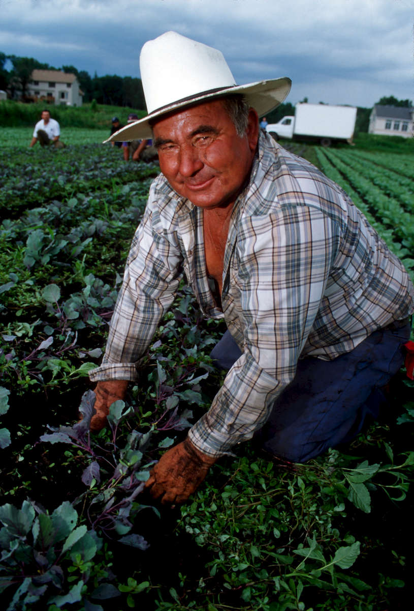 In this vertical picture an Hispanic day laborer on his hands and knees is pulling weeds from a row crop field under a cloudy sky. He is large in the frame and smiles with a sense of pride towards the camera from beneath a white straw full brim hat and he wears a plaid unbuttoned shirt and blue jeans. His hands and shirt sleeves are covered in black soil. In the distant background a new housing development is being built.