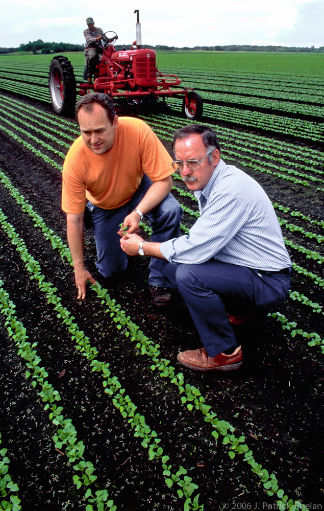 In this vertical picture two men, in the center of the image, kneel in a field of growing radishes with strong leading lines as they look at the crop. A tractor at the top of the frame cultivates the muck that the radishes are grown in that is ideal for their short growth cycle in the Anoka, Minnesote area.
