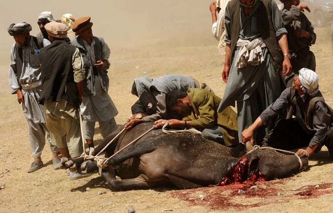 Afghan men sacrifice a bull for President Hamid Karzai in Baghlan Province.© Nikki Kahn/The Washington Post 2009ALL RIGHTS RESERVED