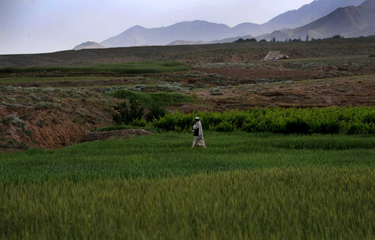 The Shomali Plains, Afghanistan.© Nikki Kahn/The Washington Post 2009ALL RIGHTS RESERVED