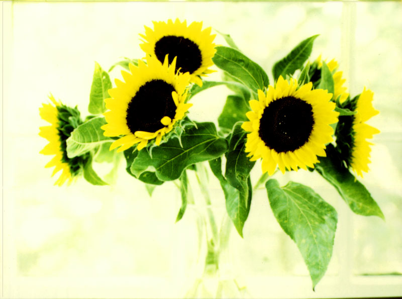 Sun-Flowers-1200-ppi-_Save_