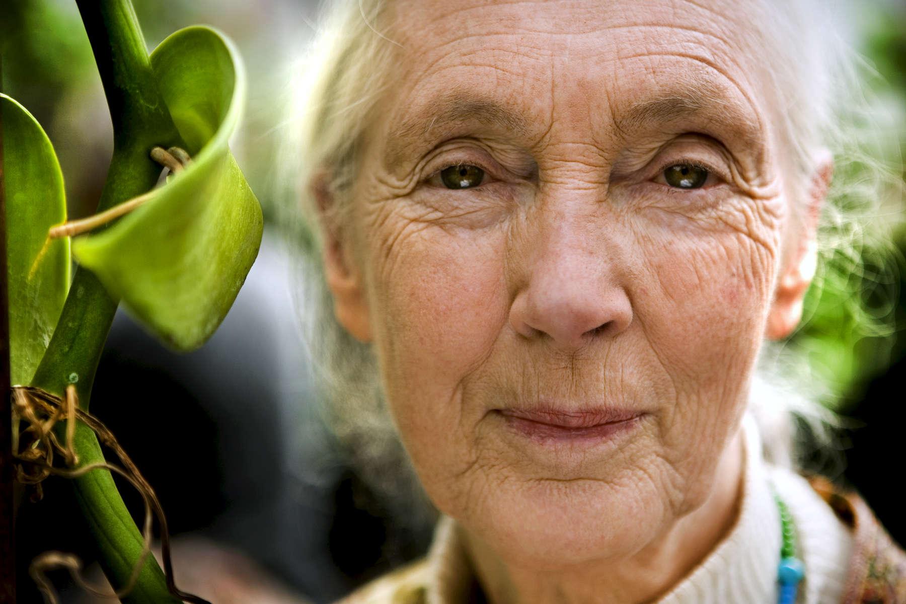 Portrait of Biologist / Primate Expert Jane Goodall