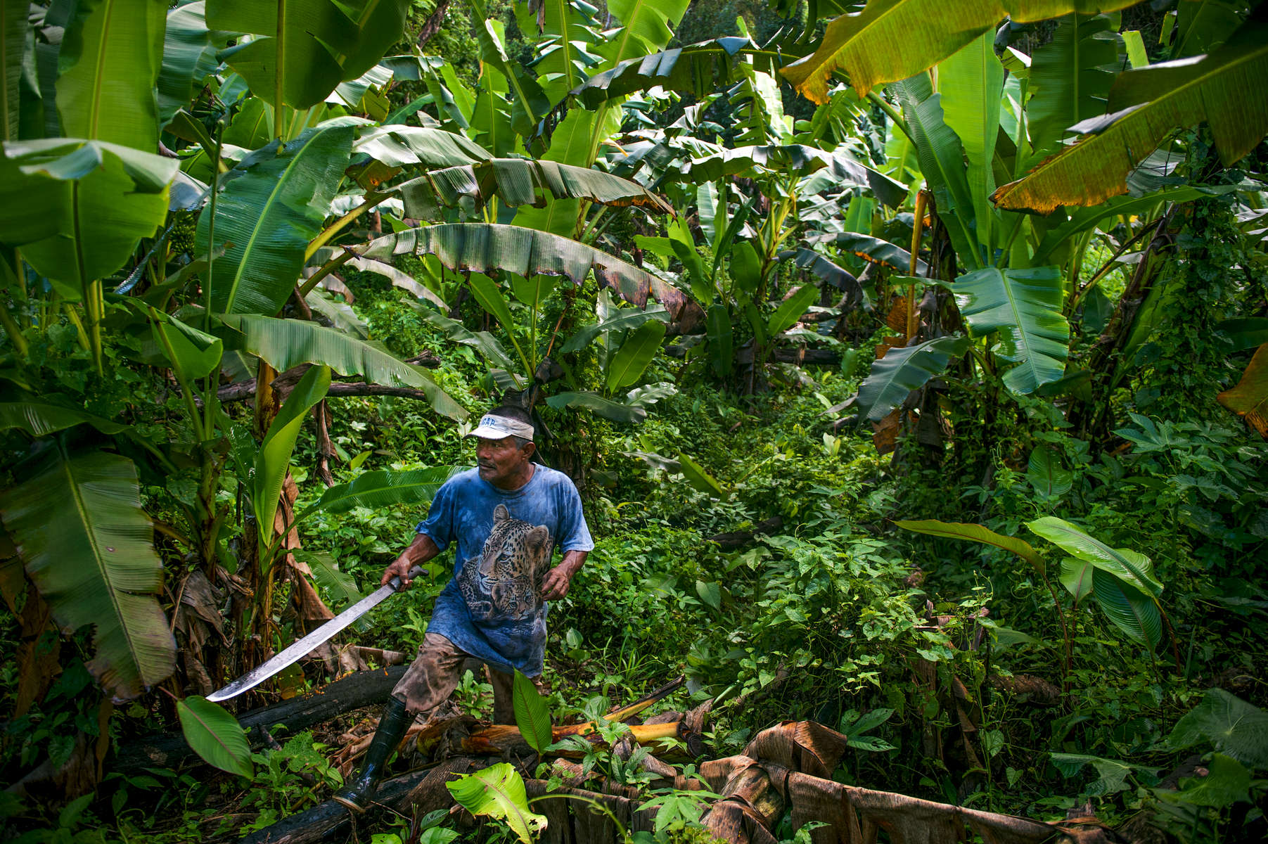 Bangkukuk resident Edwin McCrea prepares to cut down bananas in a part of the jungle where he grows subsistence crops to keep his family going.