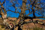 chelsea-and-brandon-ghost-ranch-wedding-2015-1018