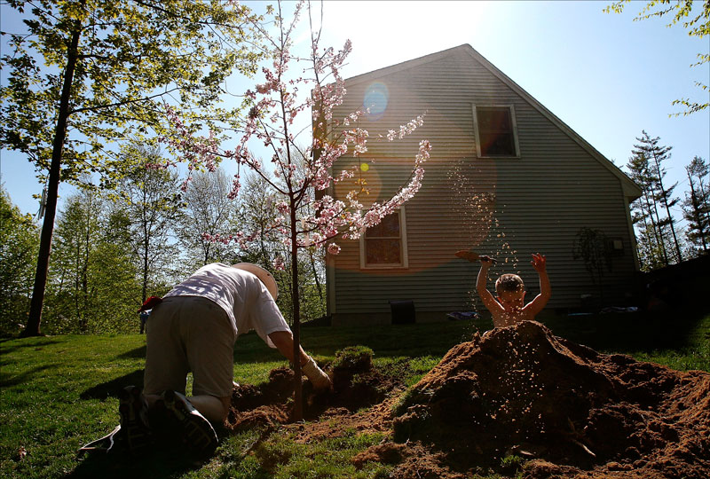 Rich and EJ plant trees in the backyard to memorialize Carolynne.