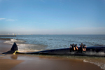 Plankers, 2012Two young men pose for a photo {quote}planking{quote} a beached fin whale in Ocean View in Norfolk, Va., on Tuesday, February 21, 2012. Though the Virginia Aquarium & Marine Science Center released a statement asking the public to stay away from the beached whale until a necropsy could be performed and the animal could be disposed of, some people couldn't resist.