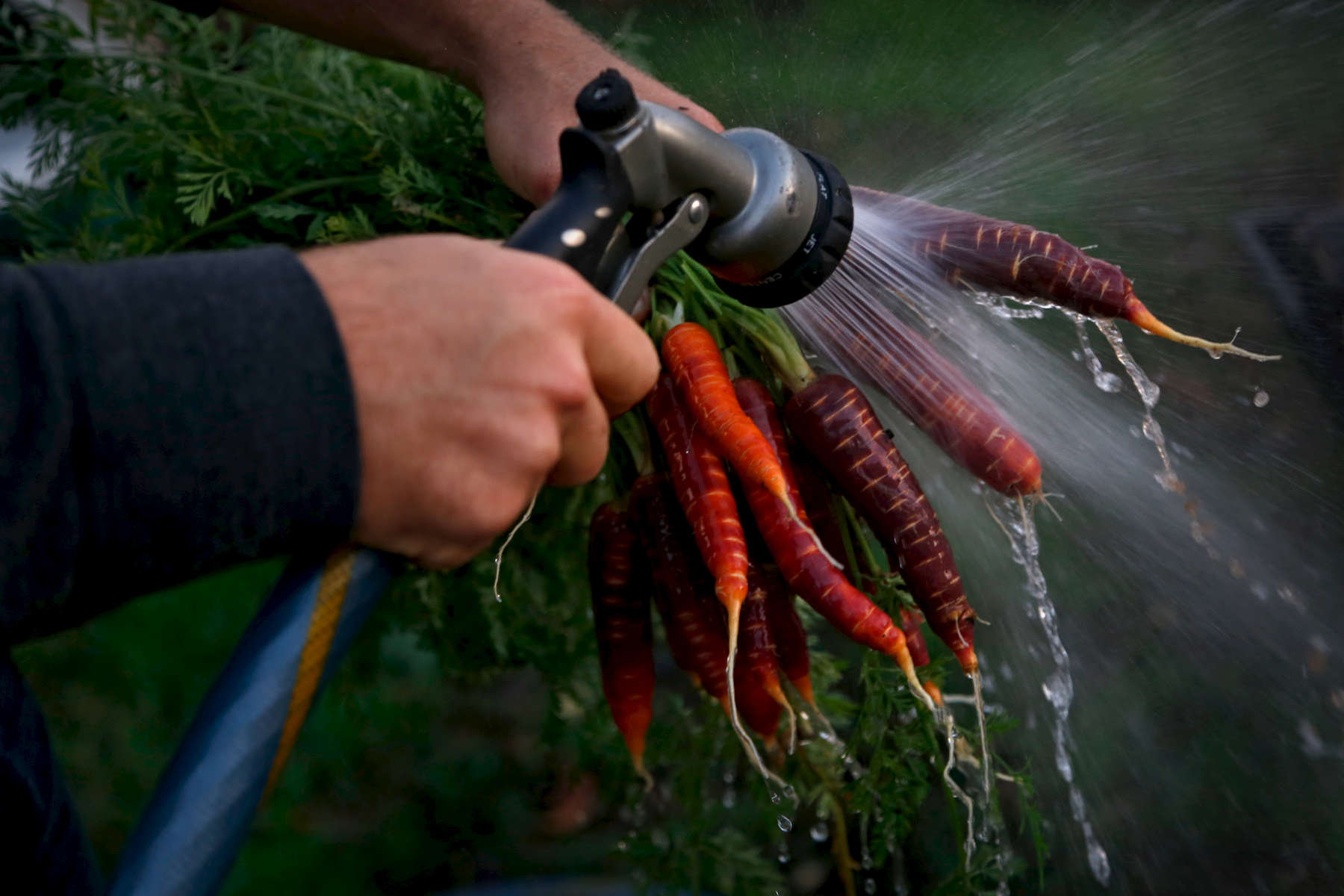 Fleet Farming Oakland farm manager Justin Vandenbroeck washes off some carrots before making dinner at home in West Oakland. Fleet Farming is another small grass-roots program that currently employs a former WOW intern. (Photo by Preston Gannaway © 2016)