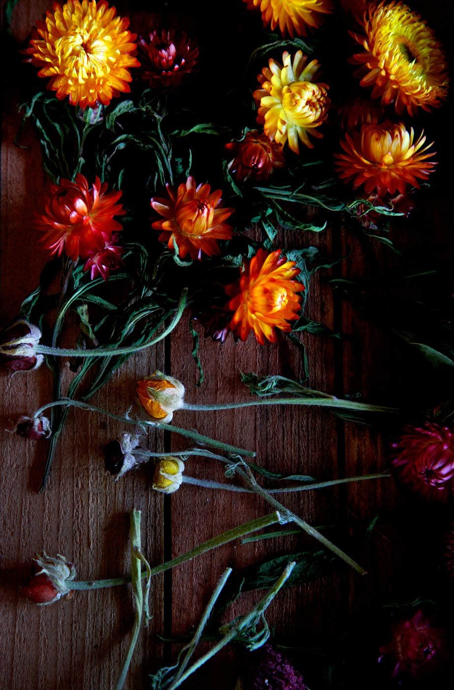 dried_flowers