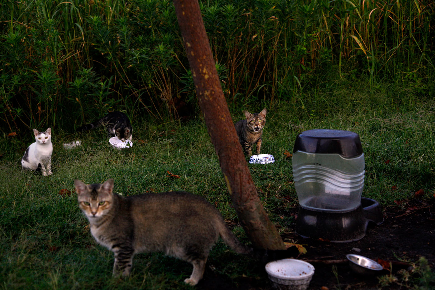About a dozen feral cats live outside of McAllister Towing in Norfolk, Va., on Friday, July 13, 2012. Employee Michelle Edwards feeds them and recently had them neutered or spayed through a trap and release program. (Preston Gannaway/The Virginian-Pilot)