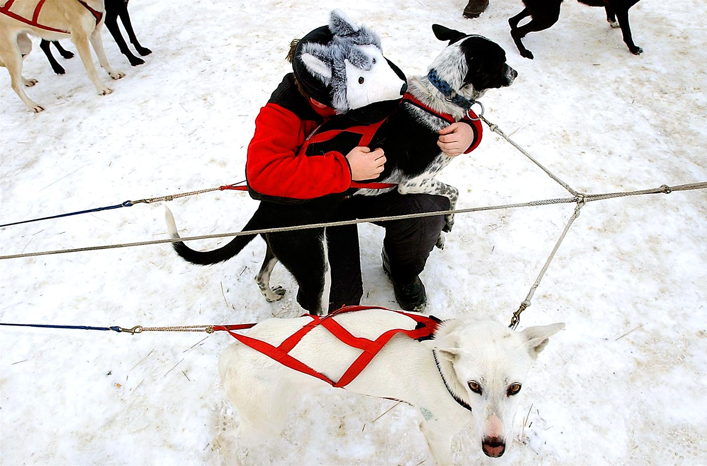 Rachel Colbath, 10, of Gilford, NH hugs a sled dog before her uncle's race in the World Championship Sled Dog Derby in Laconia, NH. Rachel has been racing dogs for four years and proudly wore the hat she recently won after finishing third place.