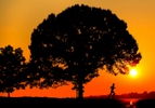 A man runs along a North Carolina country road at sunrise. Runner is silhouetted along with a large tree.
