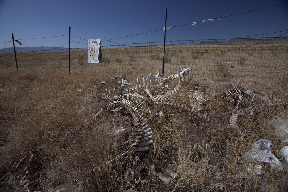 The bones of horses on the ground at the local dump on the reservation at Ft McDermitt, NV.