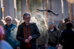 A bird flies past pedestrians walking along Market Street in San Francisco, California, U.S., on Wednesday, Nov. 28, 2018. Photographer: David Paul Morris