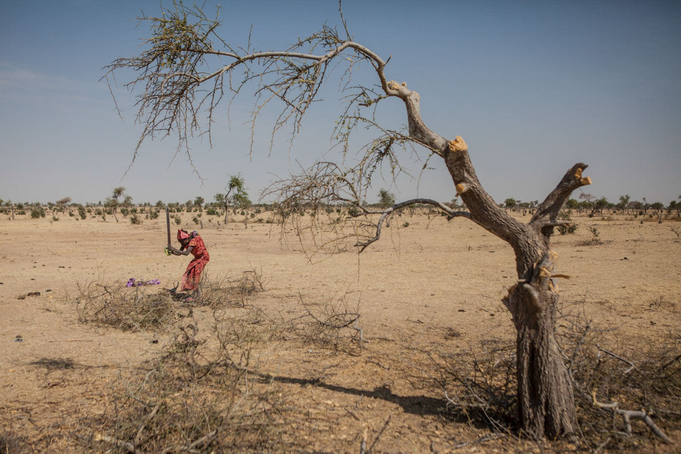 A girl originally from Nigeria breaks down remaining branches from trees cut by other refugees outside of Guam Guam camp in Diffa, Niger.Garin Wanzam Camp is the largest camp in the region hosting almost 23,000 displaced people. Many cut down trees in the area in order to help reduce the cost of firewood which can cost up to 30-40 percent of a family's monthly budget.