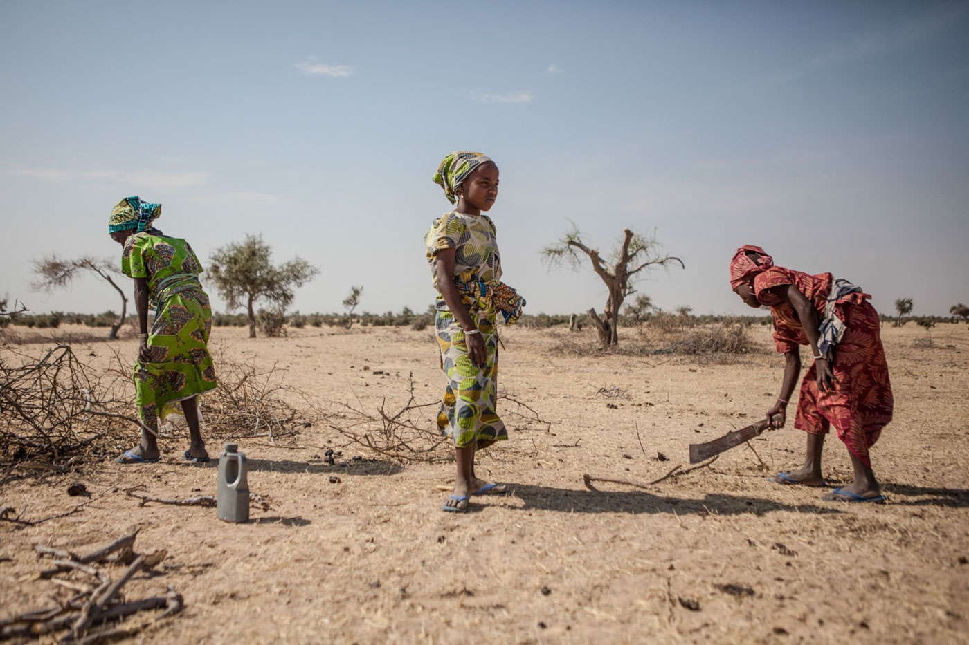 A group of girls  originally from Nigeria break down remaining branches from trees cut by other refugees outside of Guam Guam camp in Diffa, Niger.Garin Wanzam Camp is the largest camp in the region hosting almost 23,000 displaced people. Many cut down trees in the area in order to help reduce the cost of firewood which can cost up to 30-40 percent of a family's monthly budget.