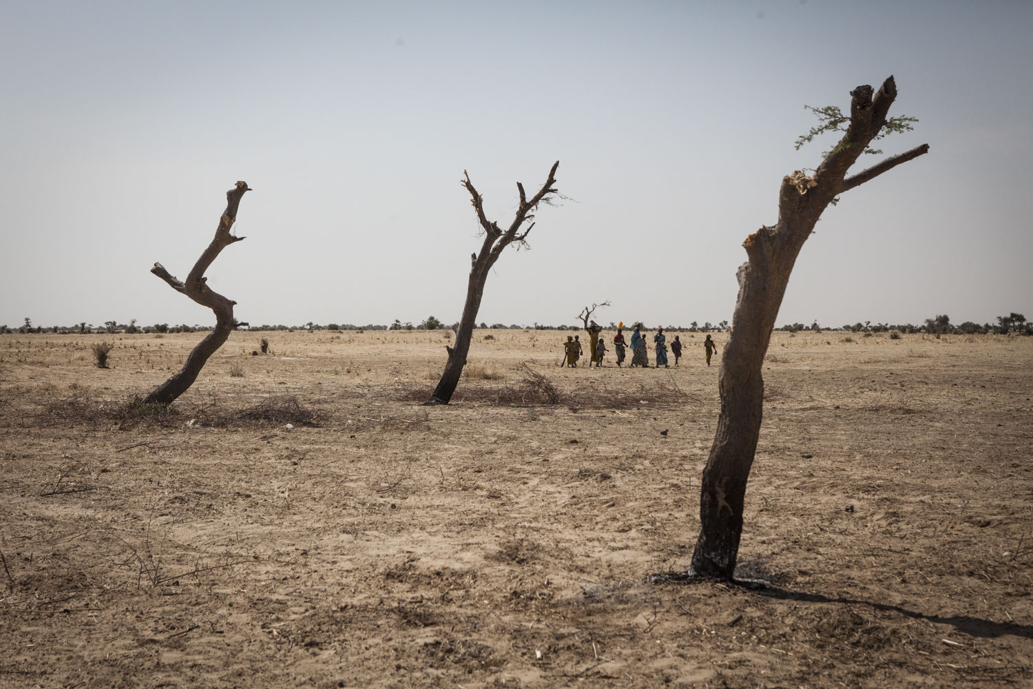 A group of women and children search for wood across from the Grain Wanzam Camp in Diffa, Niger.Garin Wanzam Camp is the largest camp in the region hosting almost 23,000 displaced people. Many cut down trees in the area in order to help reduce the cost of firewood which can cost up to 30-40 percent of a family's monthly budget.