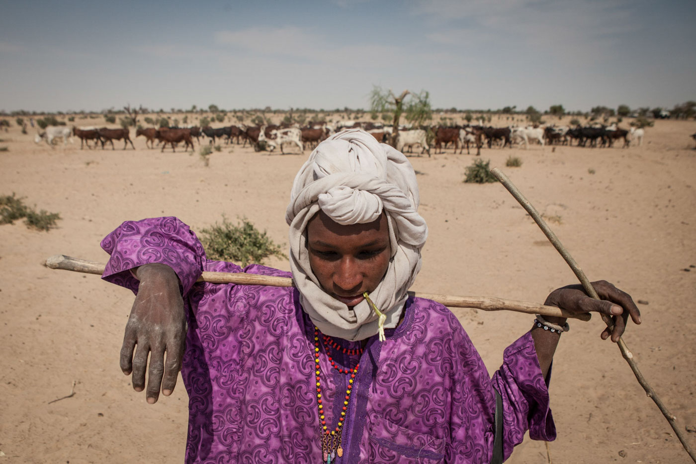 A herder leads his cows across Diffa, Niger