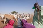 A herder drinks water in Kindjandi Town/Camp in Diffa, Niger.Kindjandi, a town of over 3000 is now supporting close to 23,000 displaced. Before the crisis, Kindjandi had one well to supply the towns people. Then during Ramadan last year, two displaced herders fought over the already scarce water, resulting in one death. Since then, aid agencies installed 15 more wells and 17 bladders containing 10,000L each (filled by truck twice a day) in order to provide enough water for the town, displaced people and the estimated 20,000 animals that visit each day in need of water. But agencies are worried as this is only a temporary solution that is not sustainable.
