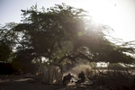 Men take shade under a tree on the shores of Lake Chad, in Tagal Village in Baga Sola, Chad.