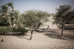 Amadou Allay, 22, walks through an area of the Lake Chad basin that was once covered in water over 30 years ago, but has now been overtaken by sand, in Broumbya Village outside of Baga Sola, Chad February 2017. Villagers recalled building a dyke to separate the water from farmland but as years passed, the farmland began to dry and the shores of the lake began to recede and now all that remain are sand and desert succulents. Present day Broumbya Village lies over 4km away from the shores of the lake and the distance continues to grow as the desert encroaches the basin. Due to recent security constraints villagers cannot move to find new farmland therefore they must rely on irregular food distributions from under funded aid organizations.
