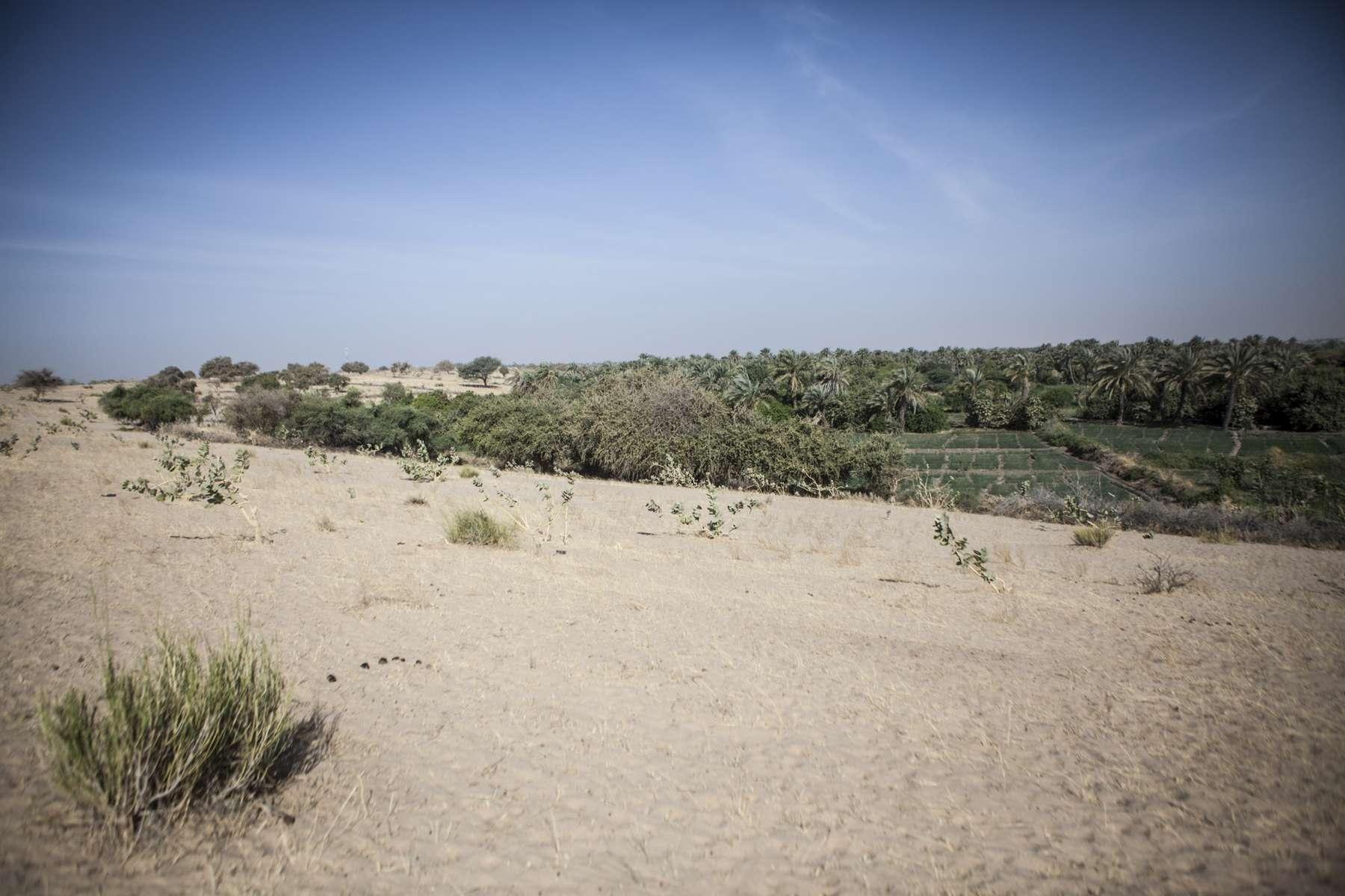 Farmland meets desert in Bagasola, Chad