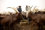 Herders stand by a well as their under fed cows graze in Danganari, Niger