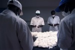 Technicians at a SOFITEX, the state run cotton monopoly, laboratory classify samples taken from each bail of cotton that exits the ginning factory for quality, strain, tenacity, color, length and other characteristics. Burkina Faso is recognized as producing some of the best quality cotton in the world.Bobo-Dioulasso, Burkina Faso.Photo © J.B. Russell