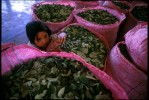 A young girl amongst sacs of coca leaves at a village market. El Chapare, in Bolivia's central lowlands, is the country's principle coca producing region and the heart of the war on drugs.Villa 14 Septiembre, El Chapare, Bolivia.Photo © J.B. Russell