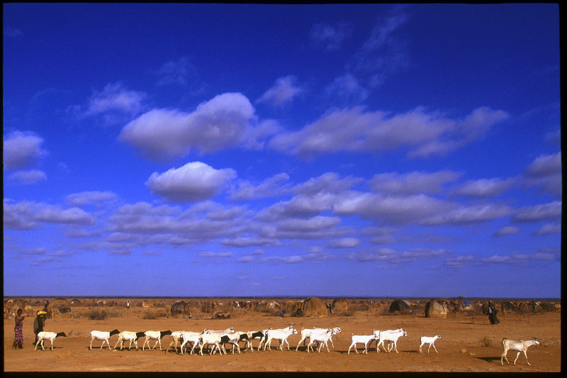Nomads in the southern Ethiopian region of Ogaden migrating with a herd of goats in search of water and forage.  Denan, Ethiopia.Photo © J.B. Russell