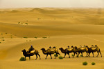 Ruzmamat, a camel man, makes his way through Taklamakan desert with his camels in Xinjiang province in China, August, 2010.