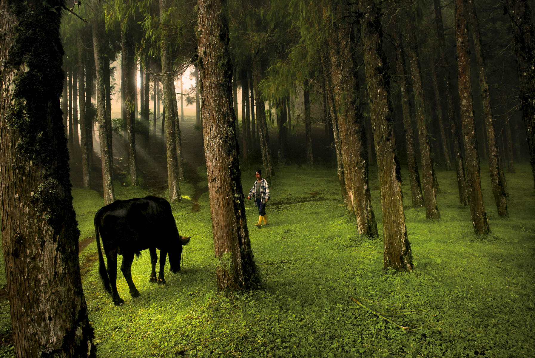 A man walks through a forest in Rethung Gonpa village outside of Trashigang,in east Bhutan, August 2007.
