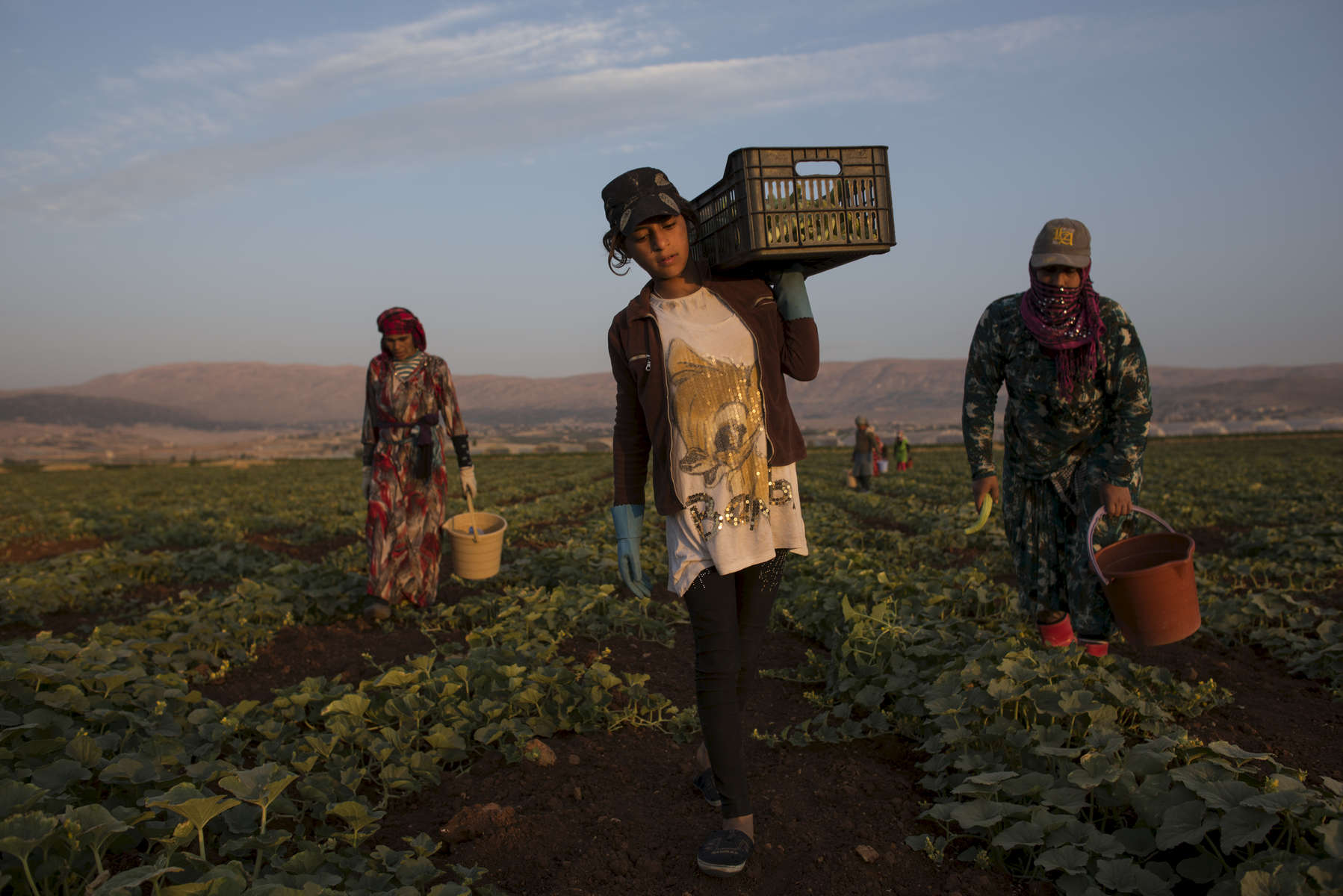 Hanaa picks cucumbers at dawn with other Syrian refugees from her informal tented settlement in the Bekaa Valley, between the city of Zahle and Baalbak, in Lebanon, August 1, 2015.  Hanaa and her family fled Syria in 2011 at the beginning of the Syrian civil war, and moved to this settlement two years ago, along with other Syrian refugees from Hasaka and the surrounding areas. Hanaa and other children in the settlement work for up to ten hours a day in agricultural lands owned by Lebanese in the area, and earn the equivalent of $5. per day.